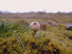 http://www.wwmushroom.ru/i.php?/galleries/Crimea/Crimea_20160129/Tulostoma_brumale_Fun_Cr_Fds_HAJ_20160129_01-03-th.JPG